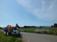 新鮮アスパラガスの収穫作業の様子